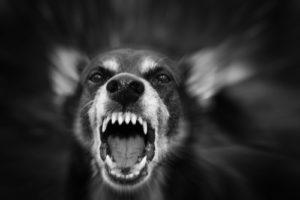 Dog Bite Personal Injury Lawyer NJ